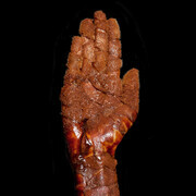 Chocolate Stigmata Open Hand